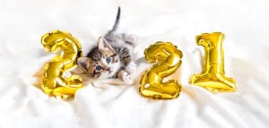 Kitty with gold foil balloons number 2021